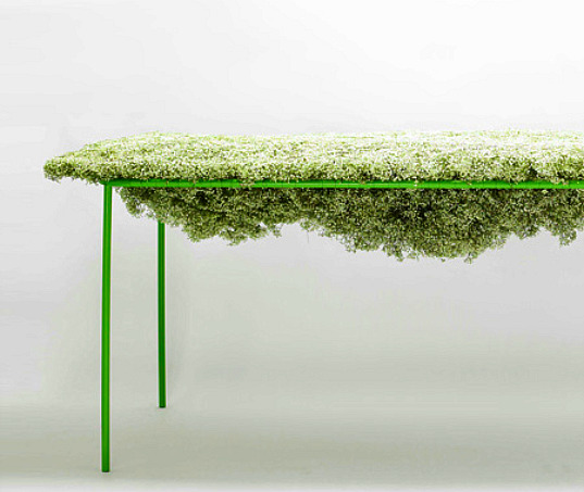 Asif Khan, living table, baby's breath table