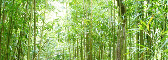 Bamboo, Bamboo Forest, Green Material, Eco-Friendly Bamboo