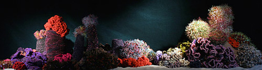 Hyberbolic Crochet Coral Reef, Institute for Figuring, Chicago, preservation, conservation, environmental art, community art, collaborative art, crochetcoralreef_4.jpg