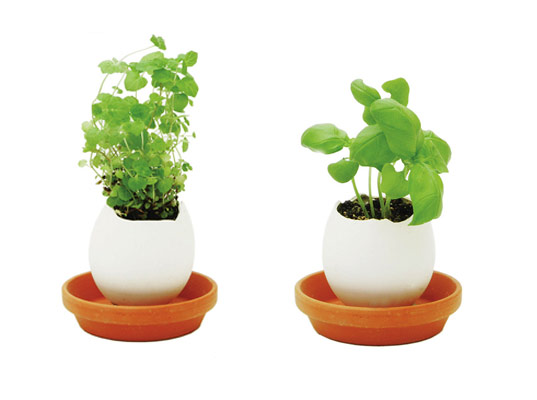 EGGLING: Grow Your Own Herbs!