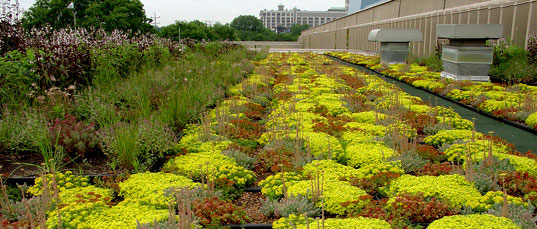 Greenroofs, Greengrid green roofs