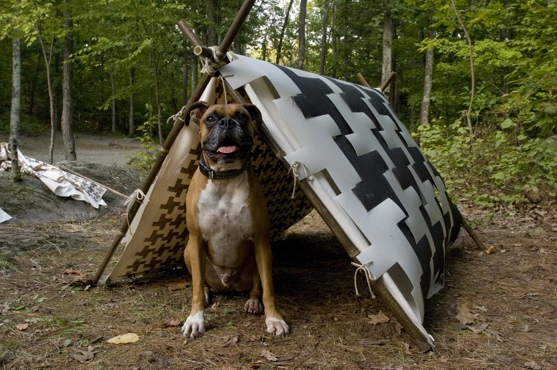 Environment & Houndstooth Dogtent: For The Most Discerning Pup | Inhabitat ...