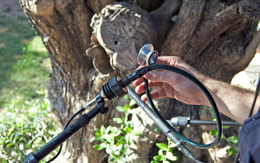 Music from a Tree, Diego Stocco, sound design, tree music, art performance, music performance, nature and music