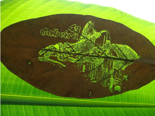 laser cut leaves, laser printed leaves, dried leaves, tatil design, brazil, natural medium, sustainble material, eco-friendly material, green material, flyer, advertising, green advertising, markeing, green marketing