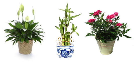 Potted plants are much greener than cut flowers, green potted plants, Inhabitat