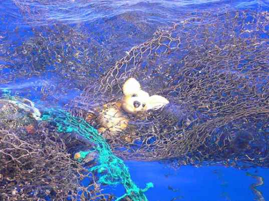 Digging Into The Great Pacific Garbage Patch