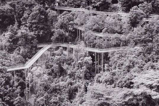 flying architecture, high line, singapore, hsbc tree top walk, urban design, green spaces, raised parks, elevated parks, suspensions bridges, elevated pathways