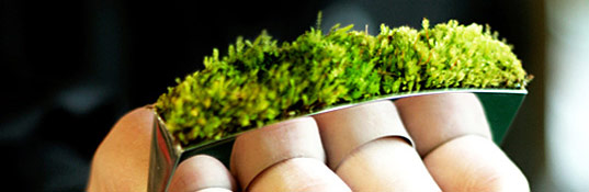 icelandic moss rings, green jewelry, plant jewelry, moss jewelry, inhabitat sustainable style, sustainable style top ten 2008
