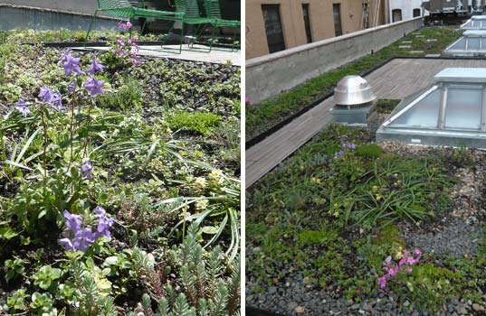 alive structures, marni horowitz, new york city green roofs, new york city green building, roof landscaping, open green space, native flora landscaping, living walls, nyc wildflower week