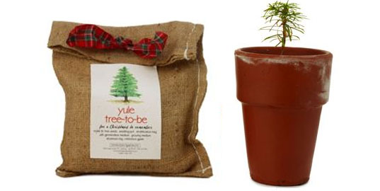 Yule Tree To Be, Uncommon Goods, plant a tree, baby xmas tree, little gift christmas tree