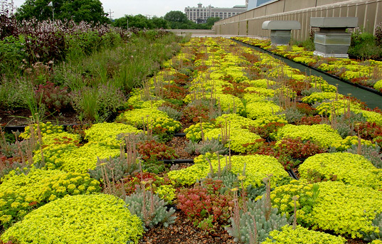 Green Grid roof, modular green roofing system, Green Building 101, Inhabitat, Design Innovation, LEED-H, Innovation in Design, OLED, Green Architecture, Sustainable Archiecture, green design, sustainable design