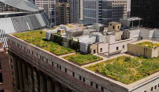Chicago Green Roofs, Chicago City Hall, Chicago Green Roof Program