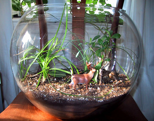 some artsy terrariums can