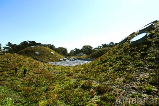 green roof, rana creek, living wall, CABoom, paul kephart, freya bardell, sustainable design, green design, sustainable architecture, green architecture, living roof, green building, natural roofs, sustainable roofs, california academy of sciences