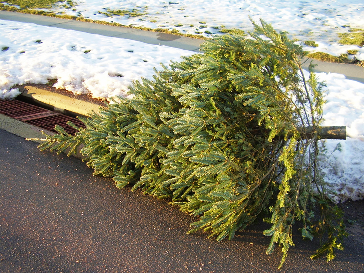 How to recycle your holiday tree | Inhabitat - Green Design ...