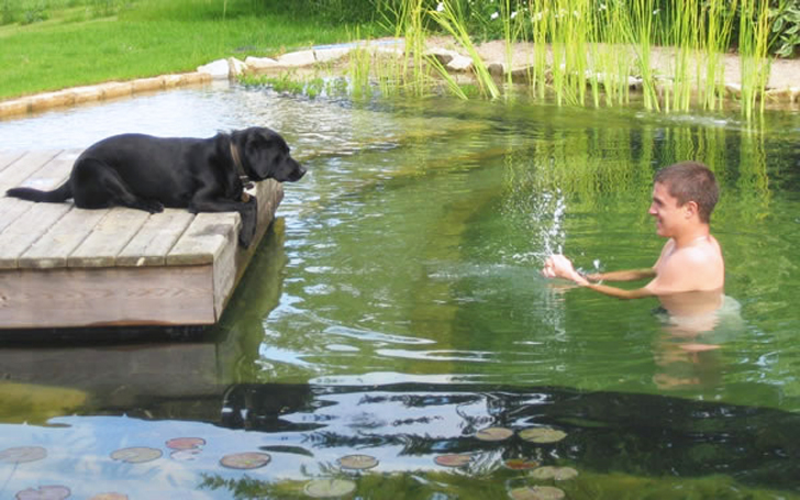 Natural swimming pools let you beat the heat and ditch for Koi pond natural swimming pool