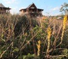 Beautiful Bamboo Living Houses Take Two Days to Build