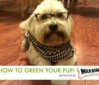 HOW TO GREEN YOUR PUP: Creating a safe environment