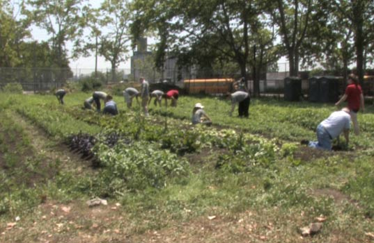 added value, red hook community farm, american express members project, urban gardening, urban farming, at risk youth, urban farm in new york city, urban farm in brooklyn, brooklyn, new york, new york city, nyc