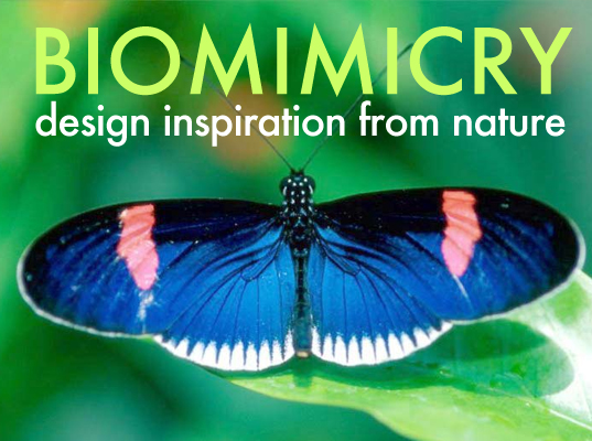 Biomimicry: Design Inspiration From Nature, green design, eco design, Janine Benyus, Butterfly Wing biomimicry, COM-BAT, biomimicry, biomimicry techniques, biomimicry solution, Qualcomm, butterfly wings, tidal power, bioStream, wind turbines X wind power, veer, Whalepower, renewable energy, whales, quantum dot solar cell