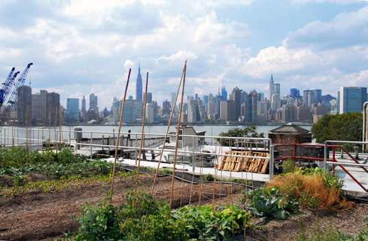 Urban Farming A Visit To Brooklyn S Eagle Street Rooftop