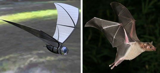 COM-BAT, biomimicry, biomimicry techniques, biomimicry solution, Qualcomm, butterfly wings, tidal power, bioStream, wind turbines X wind power, veer, Whalepower, renewable energy, whales, quantum dot solar cell