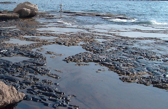 bp oil spill, deepwater horizon oil spill, gulf of mexico, gulf oil plume, Gulf oil spill, oil plume, oil spill, plume, woods hole oceanographic institute, Terry Hazen, Lawrence Berkeley National Laboratory, science, scientists, microbes, bacteria, microbes ate oil plume, oil eating microbes