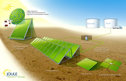 Joule Biotechnologies, microbes renewable energy fuel, bacteria  renewable energy fuel, bacteria CO2 sunlight fuel, microbes bacteria CO2  sunlight fuel, cyanobacteria