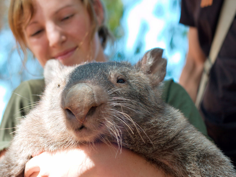 sustainable design, green design, packaging the future, green packaging, wombat, natural packaging, biology, ecology
