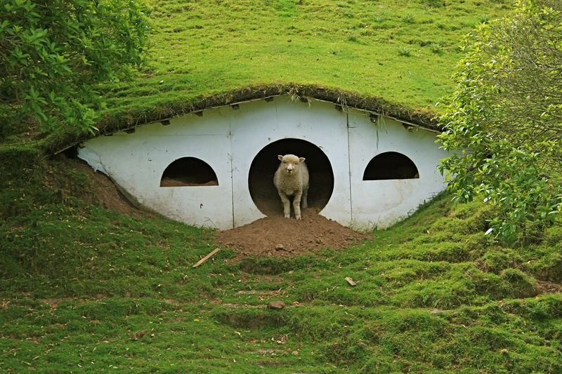 Lord Of The Rings Hobbiton Transformed Into Town For Sheep Part 37