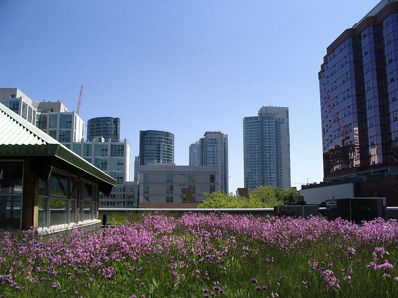 NYC Mayor Bloomberg Announces Green Roof Initiative   Inhabitat   Green  Design, Innovation, Architecture, Green Building