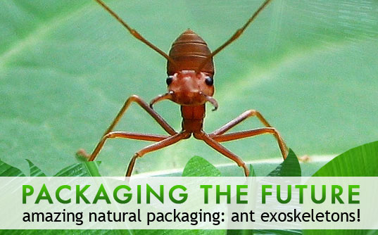 sustainable design, green design, packaging the future, green packaging, ants, natural packaging, eco design, biodegradable packaging, ant carapace