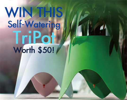 giveaways, free stuff, win it, win this, green giveaways, eco friendly planters, green planters, recyclable planters, recyclable plastic, self watering planters, self watering pot, self watering pots, Tripot