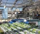 The Greenhouse Project is a Roof Garden Atop a NYC School