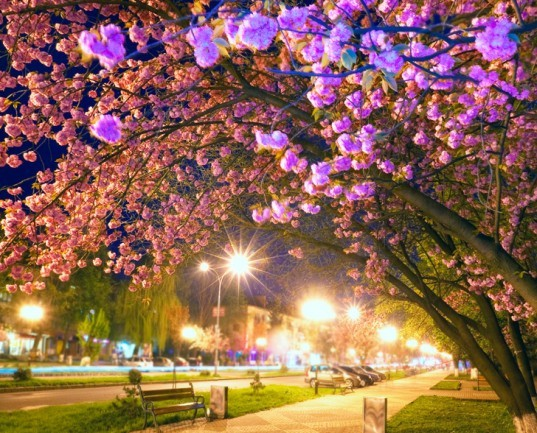 bio-luminescence, chlorophyll, gold nanoparticles, LEDs, street lights, trees, nanoscale, chemistry world, taiwan glowing trees, glowing trees, gold nanoparticles trees, nanoparticles glowing trees