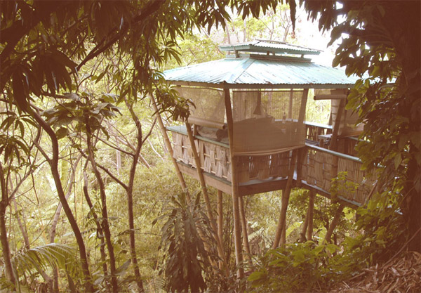 Smallest Tree House In The World hooch bamboo treehouse holds record for smallest building