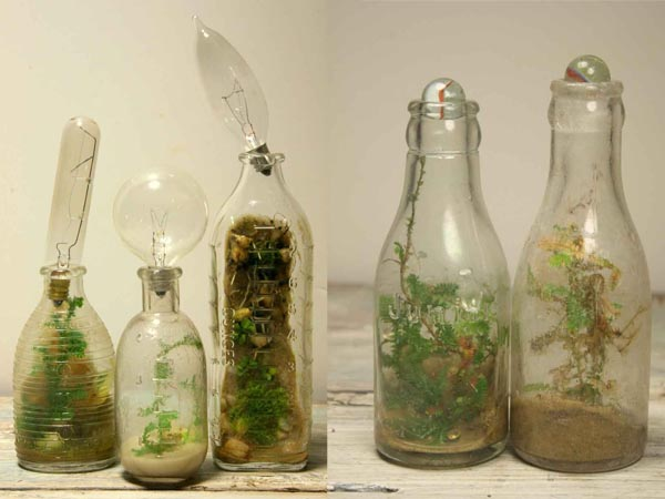 Jose Agatep S Beautiful Repurposed Bottles Terrariums Are Self