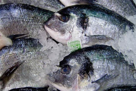 sodexo, costco, sustainable seafood, sustainable fish, sustainable food, costco sustainable seafood, sodexo sustainable seafood