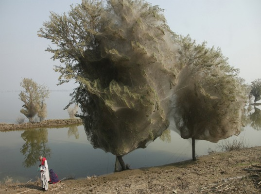 Pakistan, floods, spiders, arachnid, adaptation, webs, UK Department of International Development, malaria, public health, mosquitoes