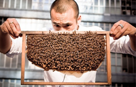 michael leung, urban bee keeping, product design, hong kong, threatened bee population, bee keeping hong knog, hong knog honey, pollination, urban honey making