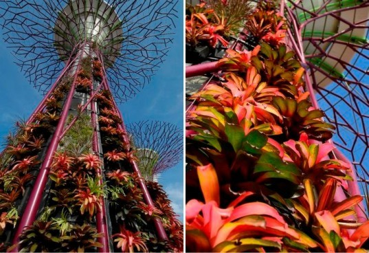 Gardens by the Bay, Grant Associates, Singapore, Supertrees, solar powered trees, landscape architecture