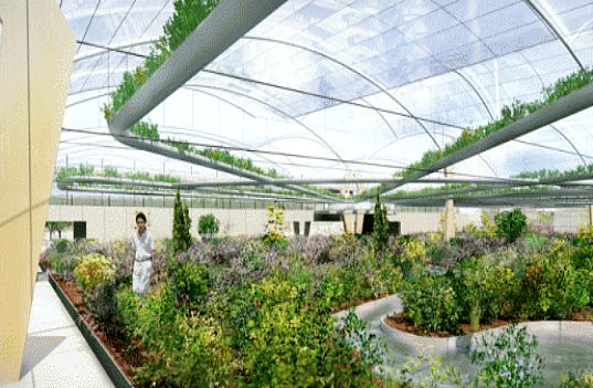 dutch, except, polydome, greenhouse, crop cluster, crop clusters, crop rotation, companion planting, three sisters, brightfarms, closed greenhouse, polyculture, sustainable design, alternative agriculture, urban agriculture, greenhouse, advanced greenhouse technology, hydroponics, zero-waste, zero waste, agriculture, plants, crops, rooftop agriculture, new york city, food supply