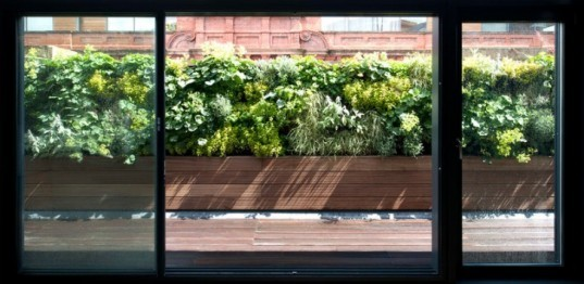 daylighting, glazing, green terrace, natural materials, Paul McAneary, Tex-Tonic House, green design, sustainable design, eco-design, Victoria, London, daylighting, urban development, sustainable development
