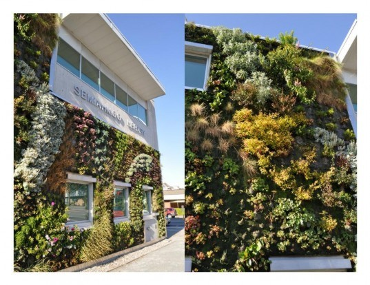 Green over Grey, Vancouver, Semiahmoo Public Library, green wall, living wall, vertical garden, ground covers, perennials, shrubs, ecosystem, insulation, air purifier, eco design, sustainable design, green design