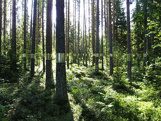 clear cut trees, clear cut art, clear cut installation, Joakim Kaminsky, Maria Poll, forest Medelpad, tree art, green art, eco art, forestation, sweden forests