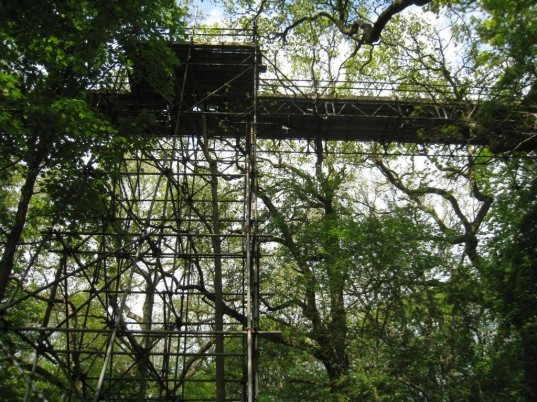 Church Forest, treetop architecture, treehouse, tree architecture, tree bridges, Meg Lowman, tree canopies, ethiopia tree canopies, deforestation, tree churches, tree living, treetop villages, treetop churches, treetop communities, canopy research, kickstarter