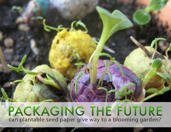 Packaging the future can plantable seed paper give way to a innovation mightylinksfo