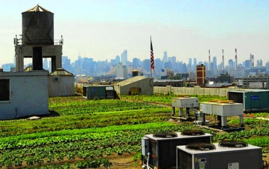 Brooklyn Grange Rooftop Farm, brooklyn grange, largest rooftop farm, urban farming, urban agriculture, organic farming, sustainable food, rooftop farming
