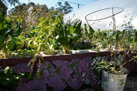 A Better World by Design; City Farm; urban agriculture; Southside Community Land Trust; CSA; Community Land Trust; community; land trust; urban; agriculture; urban landscape; green space; eco-farm; foreclosure; plots; garden; urban gardening; sustainability; farmers market; farmers markets; produce; plants; crops; food; food system; food systems; farming; farmer; farmers; urban farm; urban farming; crop production; self-sufficiency; energy efficient; energy efficiency; greenhouse; solar panel; solar panels; compost; composting; education; educational