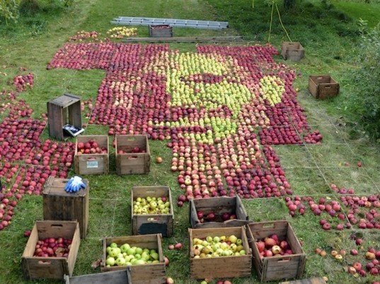 Apple, apples, organic, organic art, land art, Olivier Lefebvre, Quebec, Canada, Landart Contest, Land Art Contest, Landart, art, Steve Jobs, Tribute, hommage, artist, natural, orchard, fall, competition, green, red, 3500, 3500 apples, eco art, sustainable art, sustainability, green art, green, eco, Inhabitat